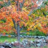 Fall Leaves and Beautiful Trees await you at Villa Norte!!